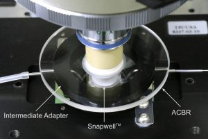 ACBR Snapwell on microscope